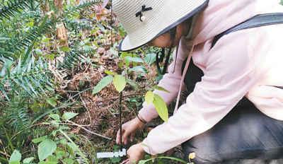 云南推进极小种群野生植物保护