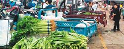 佳节临近,蔬菜等食材价格有何变化?消费者希望低价,农户盼着卖个好价,走势平稳利于市场各方。[阅读]